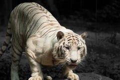 Profiel van een natuurlijke jager Royalty-vrije Stock Foto's
