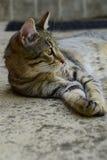 Profiel van een tijgerkat met gele ogen die onder de auto, kat op de linkerkant van foto liggen Stock Fotografie