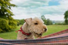 Profielportret van een hond in openlucht in een hangmat Royalty-vrije Stock Afbeelding