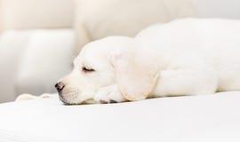 Profil av att sova valpen Royaltyfria Foton