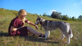 Profil av den lyckliga flickan med blont hår som sitter på grönt gräs på ängen och spelar med hennes husdjur Kvinnlig ägareutgift lager videofilmer