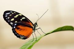 Profil av en fjäril på ett blad Arkivbilder