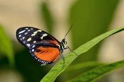 Profil av en fjäril på ett blad Royaltyfria Bilder