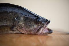 Profil av en largemouth bas Royaltyfri Fotografi