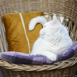 Profil av katten som ligger på kudden Selektivt fokusera Fotografering för Bildbyråer