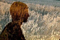 Profil av mannen i veteåker Arkivfoto