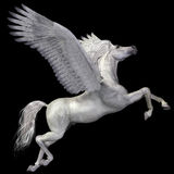 Profil blanc de Pegasus Photo stock