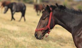 Profil d'un cheval photos libres de droits