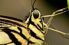 Profil d'un papillon sur une feuille Photographie stock