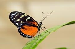 Profil d'un papillon sur une feuille Image libre de droits