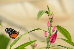 Profil d'un papillon sur une feuille Images stock
