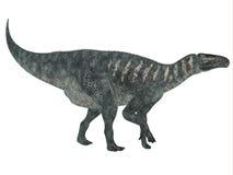 Profil de côté d'Iguanodon Photographie stock libre de droits