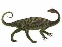 Profil de côté de dinosaure d'Anchisaurus Photo libre de droits