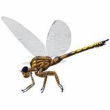 Profil de côté de libellule de Meganeura Photographie stock