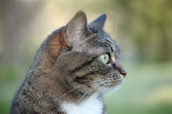 Profil de chat Photo libre de droits