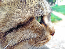 Profil de chat Photo stock