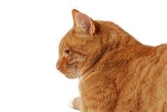 Profil de chat Photographie stock libre de droits