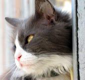 Profil de chat image stock