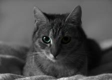 Profil de chat avec la couleur sélective Photo stock