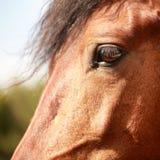 Profil de cheval Image stock