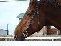 Profil de cheval Images libres de droits