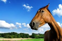 Profil de cheval Photographie stock libre de droits