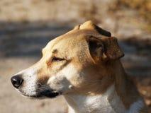 Profil de chien (25) Images libres de droits