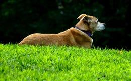 Profil de chien dans le Central Park Photo libre de droits