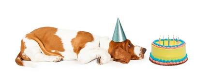 Profil de corps de la pose calme de chien de Basset Hound photographie stock