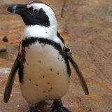 Profil de pingouin de chéri Photographie stock