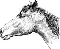 Profil de tête de cheval Image libre de droits