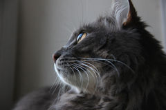 Profil der netten Katze Stockfotografie