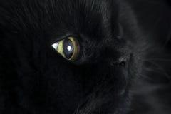 Profil der recht schwarzen Katze Lizenzfreie Stockfotografie