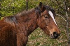 Profil des wilden braunen Pferds im Holz Stockfotografie