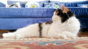 Profil einer legenden Katze auf einem roten Teppich zu Hause Lizenzfreies Stockfoto