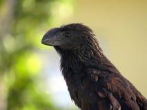 Profil eines majestätischen schwarzen Vogels lizenzfreies stockfoto