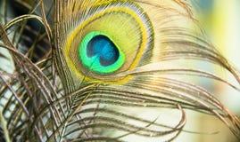 Profil för fågel` s Arkivbild