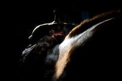 Profil för mörk häst med sadeln arkivfoto