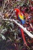 Profil för sida för längd för arafågel full, medan sätta sig i ett träd Arkivfoton