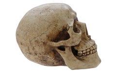 Profil humain de crâne photographie stock libre de droits