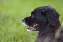 Profil-Hundenahaufnahme im Freien Lizenzfreie Stockfotos