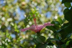 Profil idyllique de fleur rose images stock