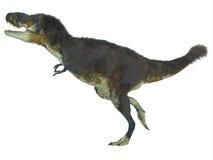 Profil latéral de Daspletosaurus illustration libre de droits