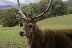 Profil latéral de mâle avec de grands klaxons photos libres de droits