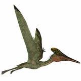 Profil latéral de Pterodactylus Photos libres de droits
