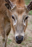 profil s för david hjortpere Royaltyfria Bilder