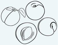 Profila l'albicocca con le foglie Immagini Stock Libere da Diritti