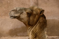 Profile of an african camel Royalty Free Stock Images