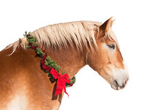 Profile of a blond Belgian draft horse wearing a Christmas wreath Royalty Free Stock Photos