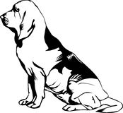 Profile of a bloodhound. Illustration of Bloodhound dog, profile view Stock Photography